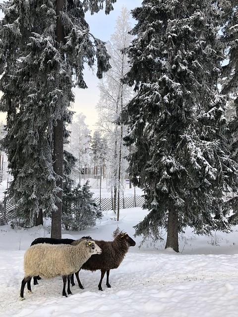 Ähtäri zoo, Finland 2018 139