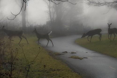 trail hike hiking photo fz1000 lumix lumixphotography fog mist moody deer ohio midwest columbusohio