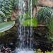 Tropical Waterfall RHS Wisley 08 February 2018 (2)