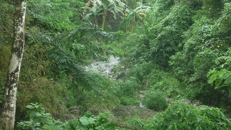 verdant_wooded_areas