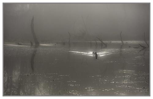Ducks in the mist - explore 12.1.18 thanks!