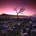 The Yawning Tree by Stu Patterson