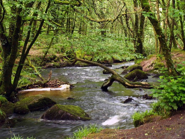 Cornish Stream