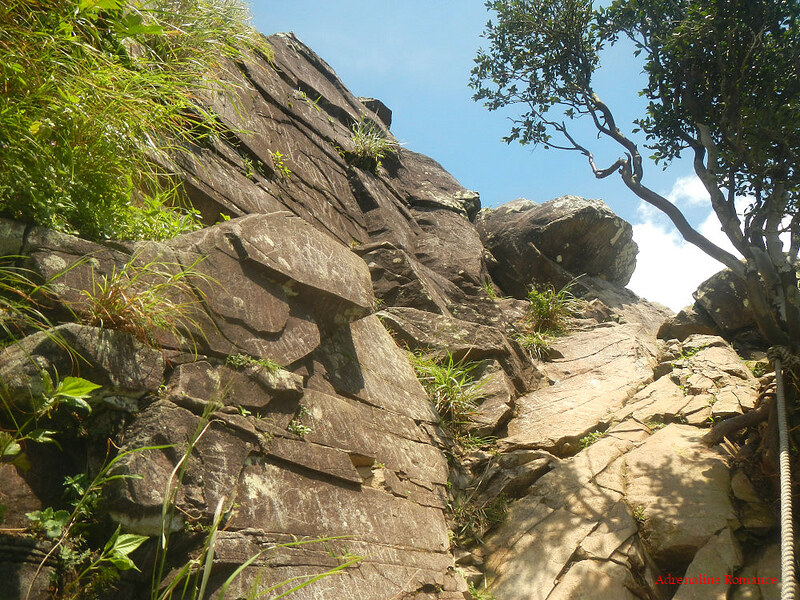 Climbing Parrot's Beak