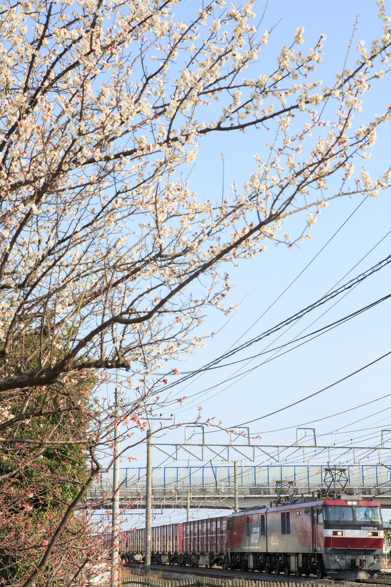 EH500 4 / Tokaido Line