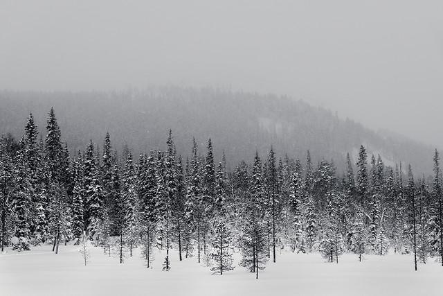 Greyed Out Kesänki Fell
