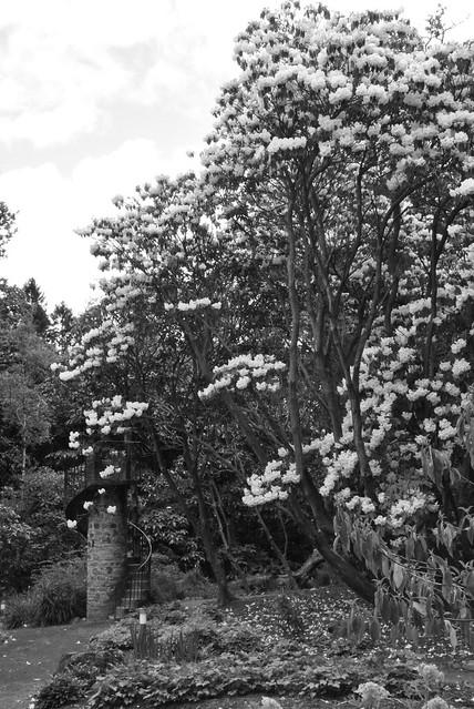 clyne gardens 3