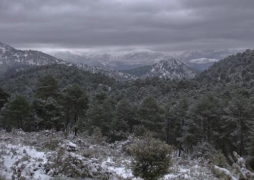 334. La Alfaguara. Parque Natural de la Sierra de Huétor.