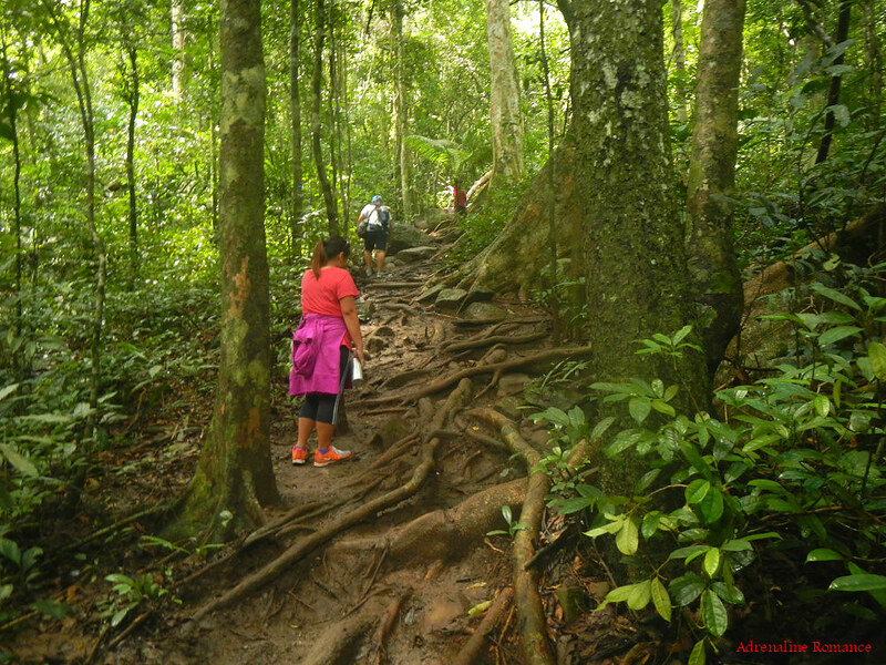 Trail to Pico De Loro's summit