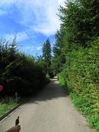 20140804 02 081 Jakobus Weg Bäume Wolken