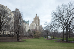grate field, central park