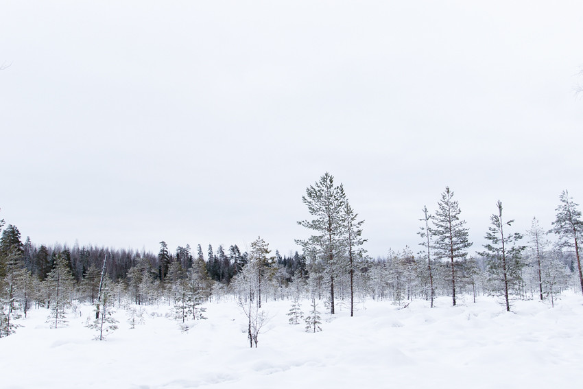 talvinen suo-2608