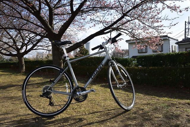 Escape Airと多摩川の河津桜