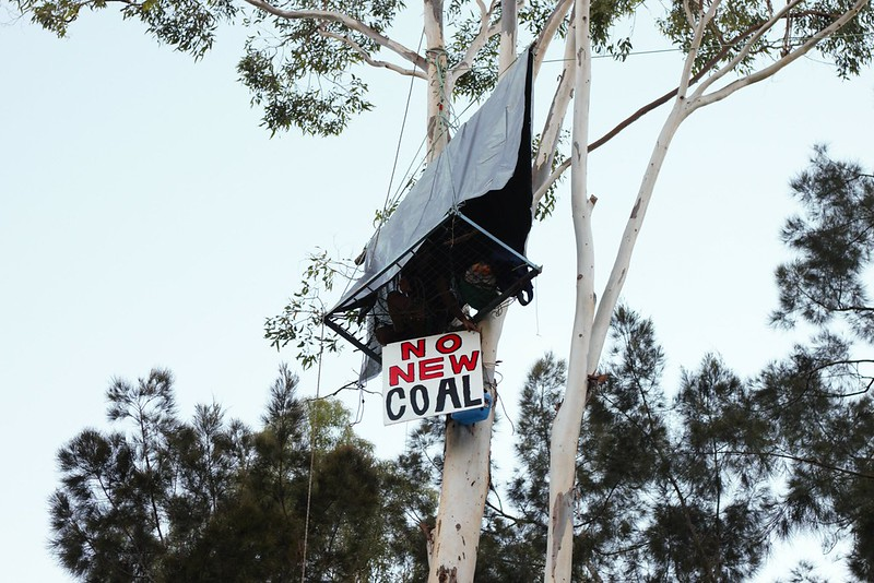 tree sit on rail line