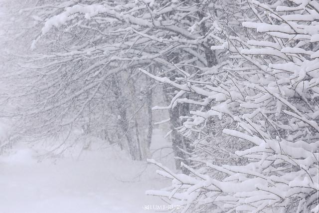 Снегопад 31 января 2018