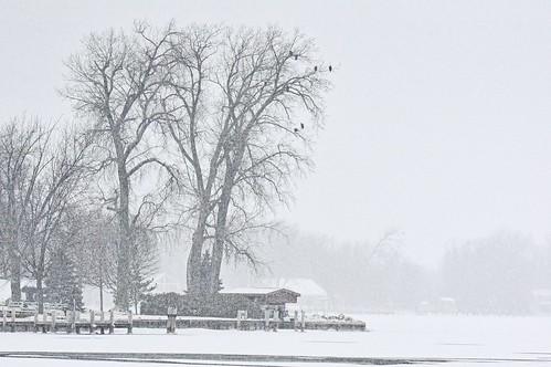 eagles winneconne wisconsin snowstorm wolfriver johnhenrygremmer