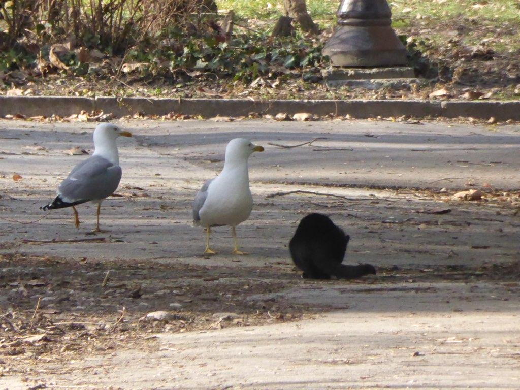 Чайки+котэ
