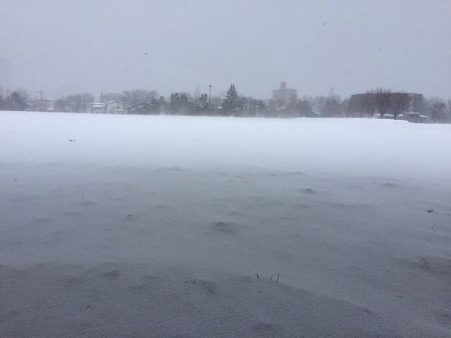 in snowy Field