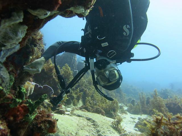 Burgos Reef 061