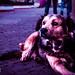 Who is a Good Homeless Boy? por disgrainder