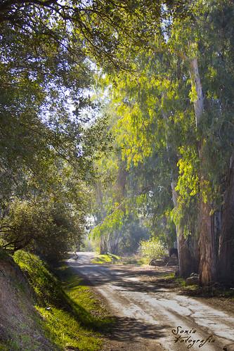 Ruta Fuente Agria ( Villafranca de Córdoba)
