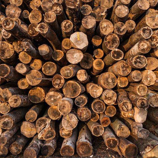[FIL OUVERT] le bois sous toutes ses formes - Page 6 39555182762_322d9a0549_z