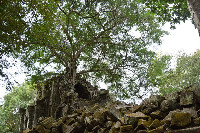 遺跡から生える大きな木