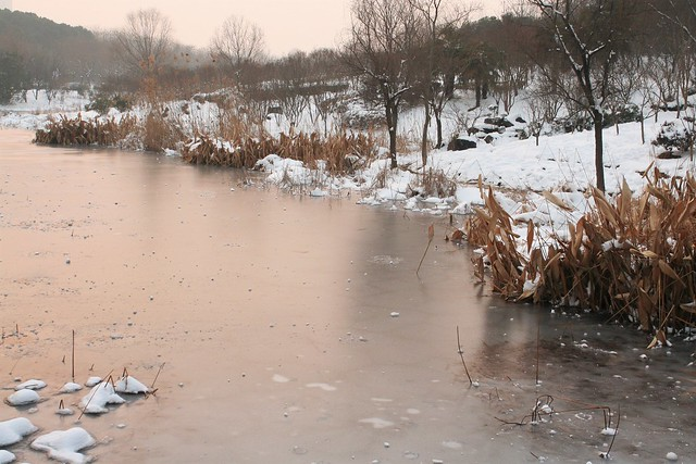 明孝陵前燕雀湖,此時正值南京大雪,萬物風霜。