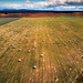 Small photo of Patagonia hayfield