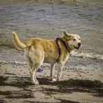 2015-09-05_15-03-11 - Hund spielt am Strand
