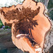 Tree Rot