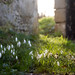 Snowdrops | St James' old church | Blood on Satan's Claw locations | Bix Bottom | Oxfordshire | Feb 2018-37