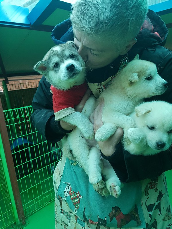 Sharon Ferguson at SaveKoreanDogs.org Sanctuary Feb 2018