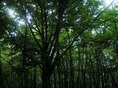 20070903 13063 0710 Jakobus Wald Baum