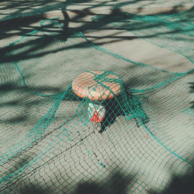 Mushroom bench
