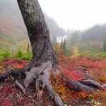 Fall at Mt Baker