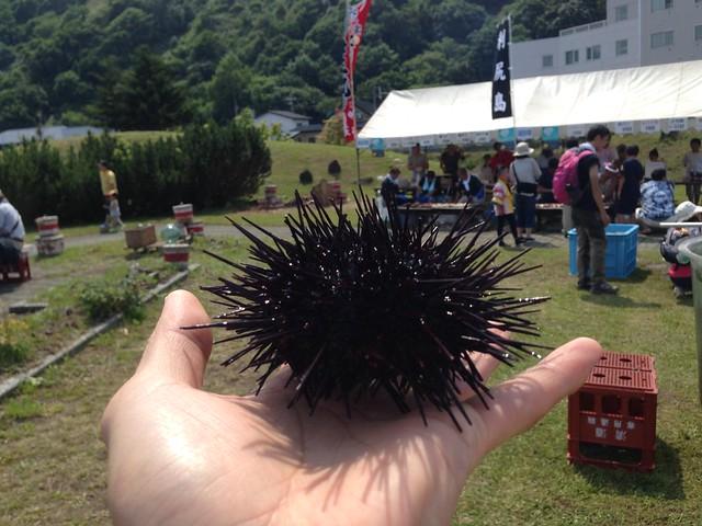hokkaido-rishiri-island-minato-beer-garden-sea-urchin-02