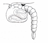 ncert-class-9-science-lab-manual-life-cycle-of-mosquito-8