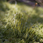 Moss%2C+Green+in+Mid-Winter