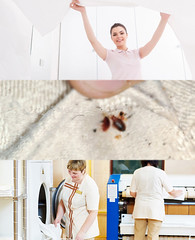 Bed Bugs are Indication of Moist Atmosphere