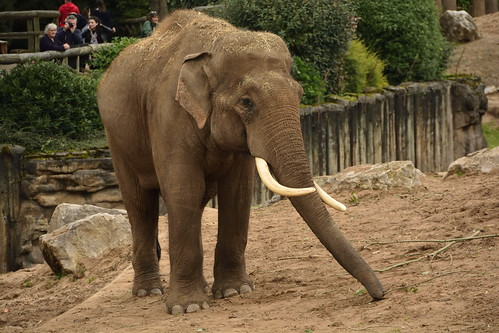 Chester Zoo (379)