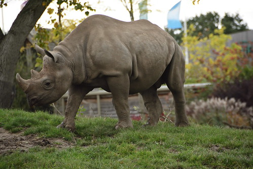 Chester Zoo (807)