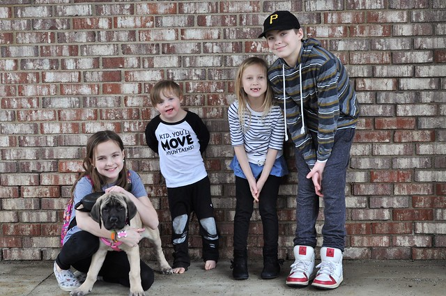 Puppy Love: Introducing Ella the English Mastiff! #dogs #puppies #englishmastiff #lifewithkids #familylife #specialneeds #Downsyndrome