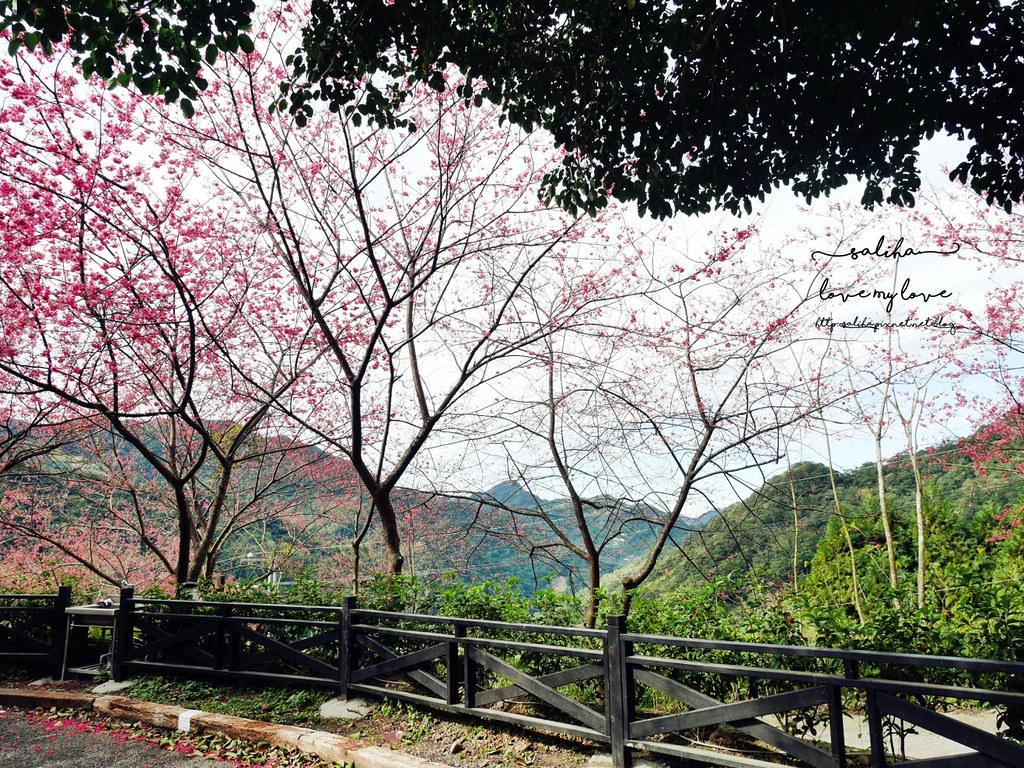 三峽一日遊景觀餐廳推薦花岩山林 (5)