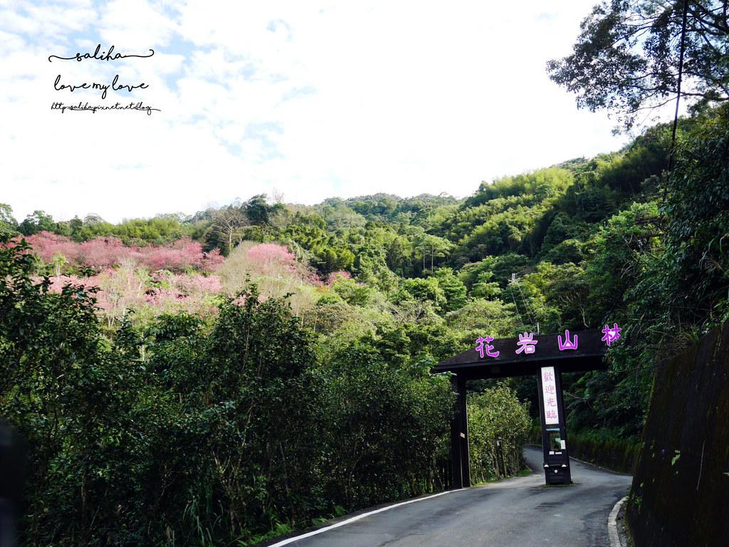 新北賞櫻景點推薦三峽花岩山林 (2)