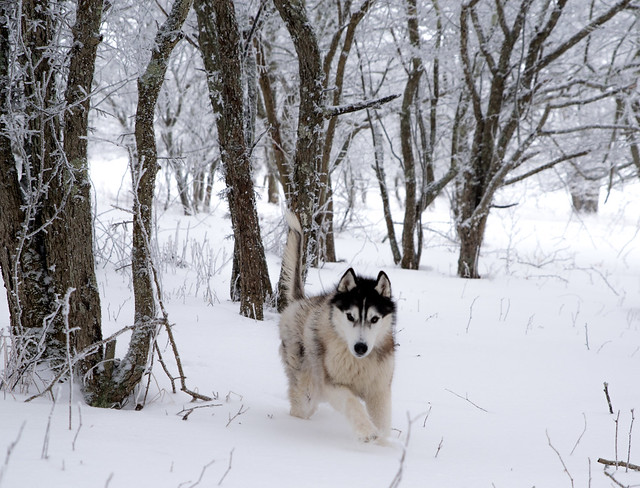 20180208 Winter scenes and dogs_13