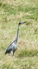2017 decembre. Arusha National Park, birds