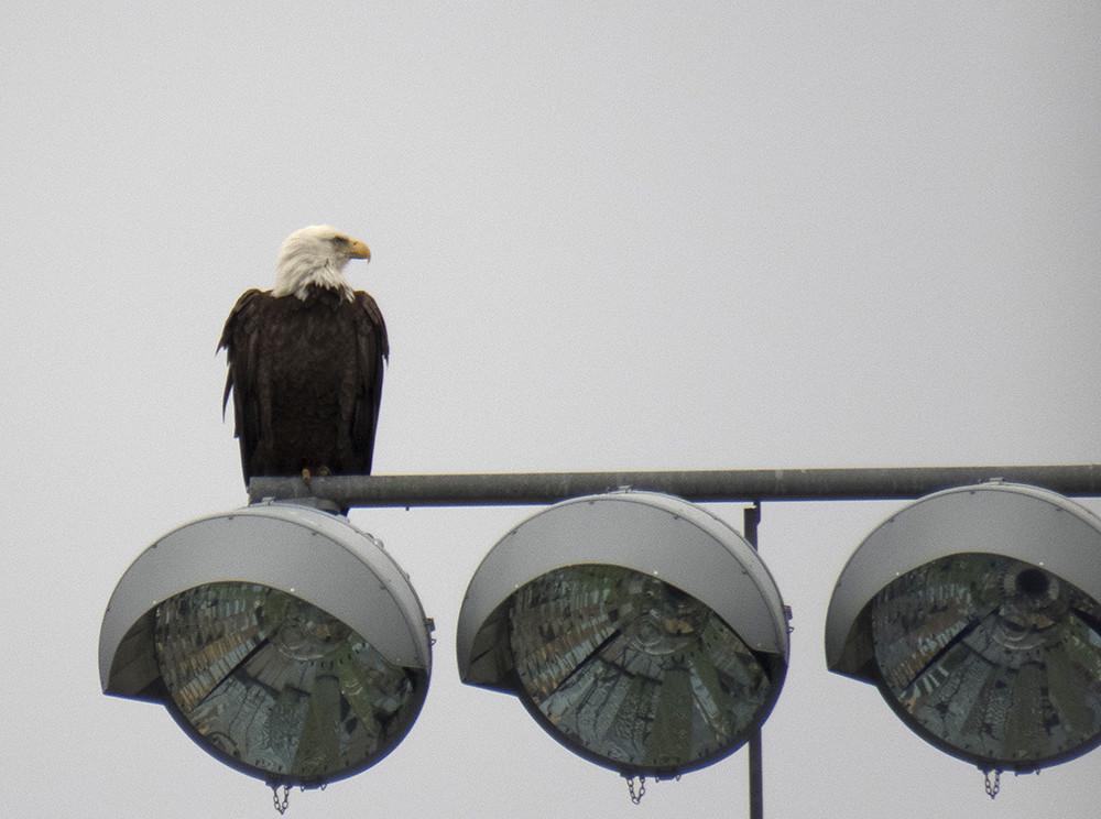 Asbury Eagle