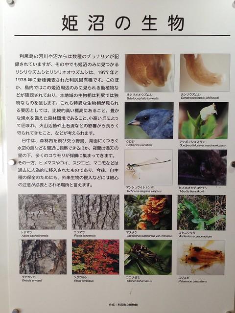 hokkaido-rishiri-island-himenuma-pond-information-03