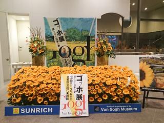 京都国立近代美術館の会場ロビーに飾られたヒマワリ。初日の先着100   名にプレゼントされた